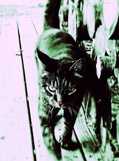Badasscat StreamzooVille EyeEm Nature Lover Catsofinstagram Cat Lovers Shades Of Winter