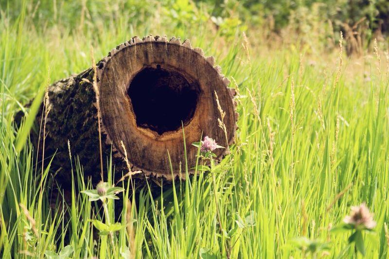 Tree Grass