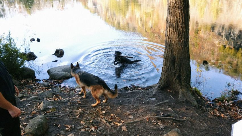 Water Reflections Happy Dogs Randonné Sunny Day