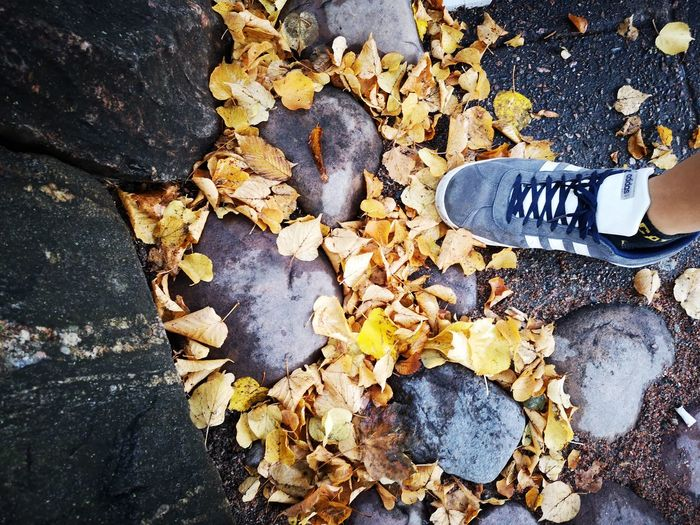 Spring - hösten kommer Shoe No Edit/no Filter Huaweiphotography Leicacamera Theme Park Sweden Real People Leaf High Angle View Close-up Fall Full Frame Leaves Autumn Autumn Collection Fallen Leaf