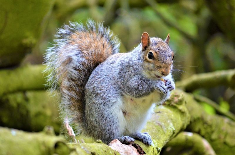 Animal Themes Animal Rodent One Animal Mammal Animal Wildlife Squirrel Animals In The Wild Focus On Foreground No People Close-up Vertebrate Day Nature Plant Rock Outdoors Solid Tree Rock - Object Whisker