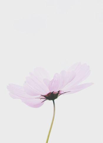 若有似無,好像輕輕呵護也會消失 Flowers Discover Your City