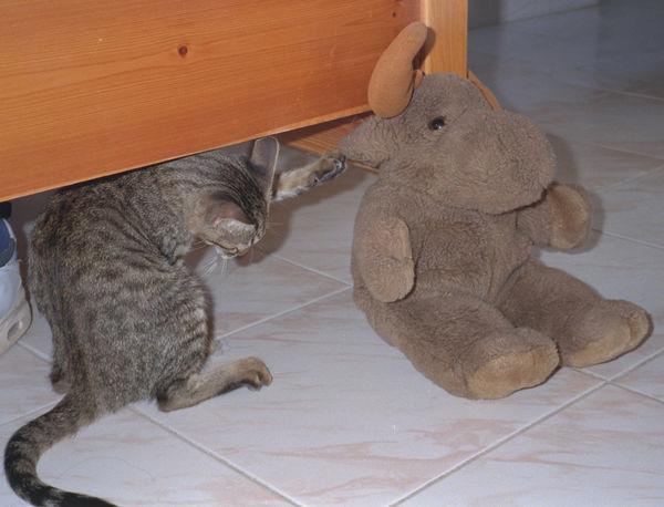 Brown Cat Cuddly Toy Cute Kitten Mammal Moose No People Pet Playful Playing Tail Toy