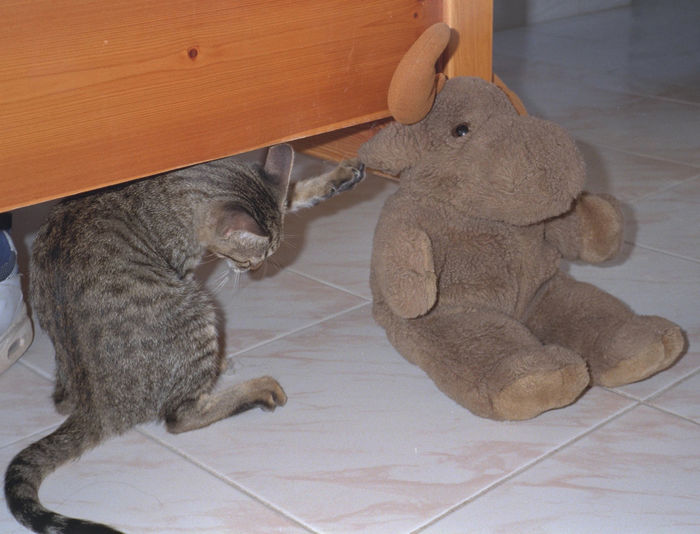 Brown Cat Cuddly Toy Cute Kitten Mammal Moose No People Pet Playful Playing Tail Toy