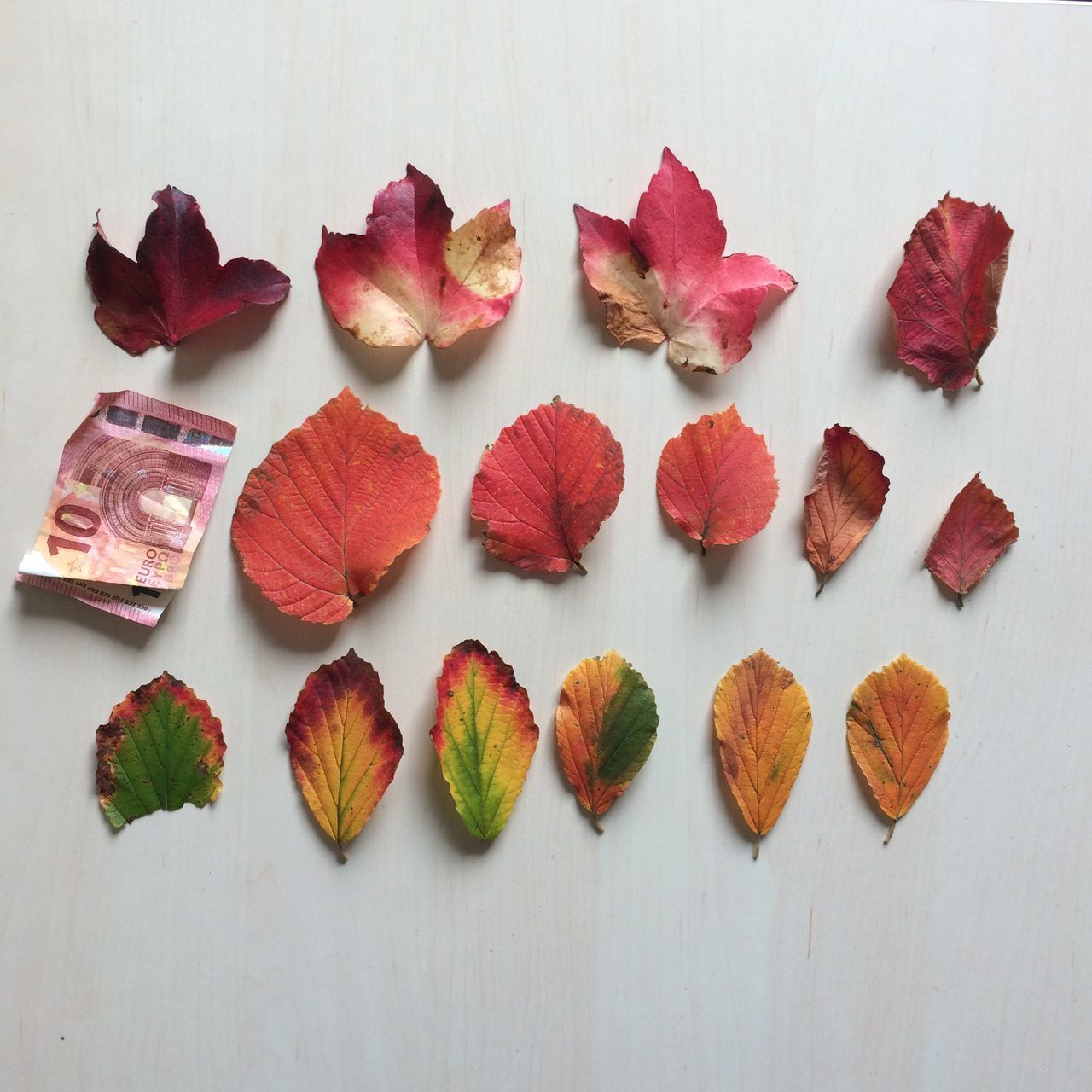 High Angle View Of Various Autumn Leaves With Paper Currency