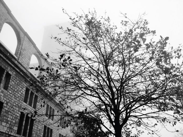 B&w Street Photography Tree Autumn Fog Barcelona Catalunya