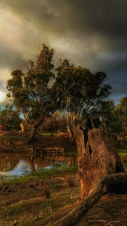 'Farm on the Creek' NEM Painterly •Inspired by John Constable• Old Masters 43 Golden MomentsExceptional Photographs The Great Outdoors - 2016 EyeEm Awards Australia Note the Corellas in the tree tops; a very common sight here. Life Is Good Malephotographerofthemonth EyeEm Best Shots Tadaa Community EyeEm Best Shots - Nature Android Photography Artistic Photo Art Gallery Eye4photography  EyeEm Nature Lover EyeEm Best Edits In The Moment Australia❤️ Beautiful Day Golden Hour The Nature Photographer - 2016 Eyeem Awards