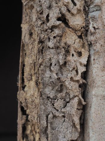 Textured  Tree Trunk Close-up No People Rough Day Nature Tree Outdoors Termite
