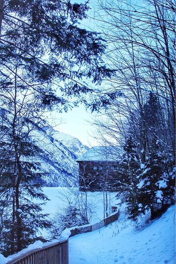 Kaprun Austria ÖsterreichSnow Winter Cold Temperature Tree Nature Bare Tree Weather Beauty In Nature Branch Scenics Tranquility No People Day Tranquil Scene Outdoors Covering Sky Building Exterior Mountain Snowing