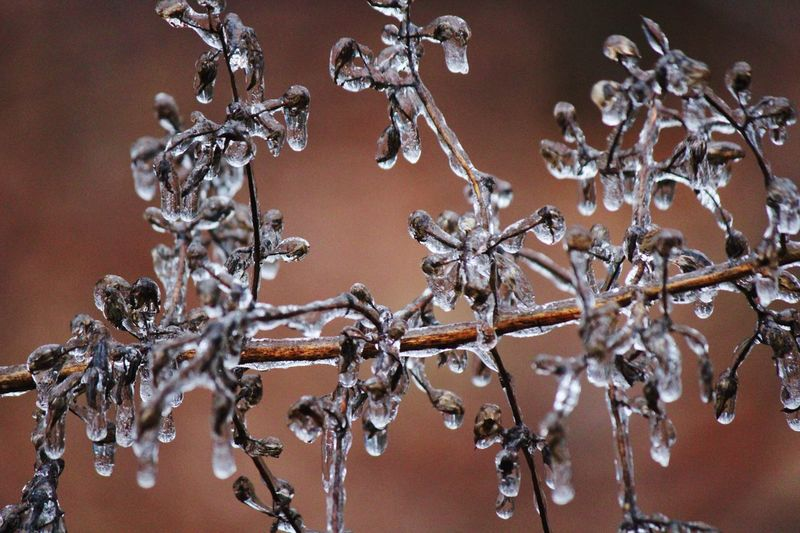 Close-Up Of Frozen Plants Against Blurred Background