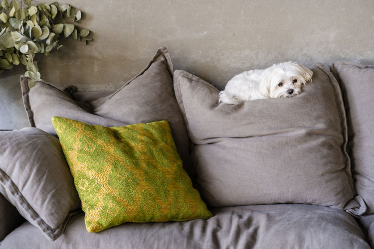 View of a dog relaxing on bed