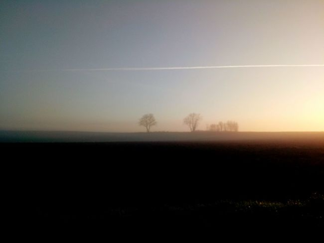 Tree Fog Sunset Rural Scene Silhouette Field Agriculture Sky Landscape Single Tree Horizon Over Land Atmospheric Mood Majestic