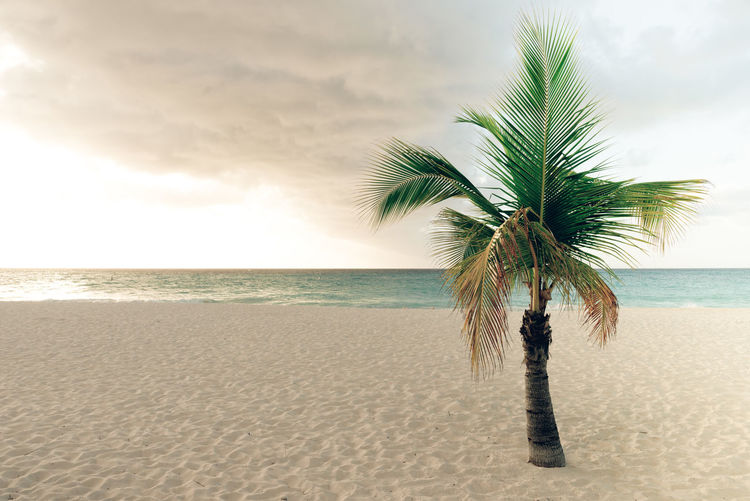 Beach Beauty In Nature Cloud - Sky Coconut Palm Tree Horizon Horizon Over Water Land Nature No People Outdoors Palm Leaf Palm Tree Plant Sand Scenics - Nature Sea Sky Tranquil Scene Tranquility Tree Tropical Climate Tropical Tree Water
