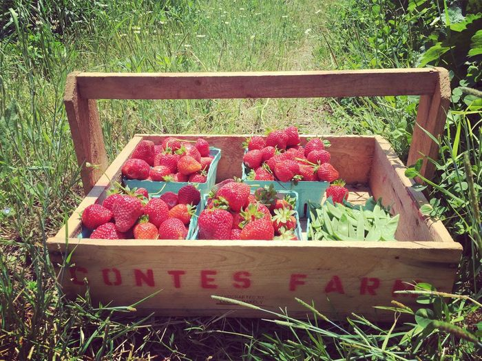 What is more beautiful then food from the earth. The Essence Of Summer The Great Outdoors - 2016 EyeEm Awards Strawberries Farmtotable Gods Beautiful Creation Nature Beauty In Nature