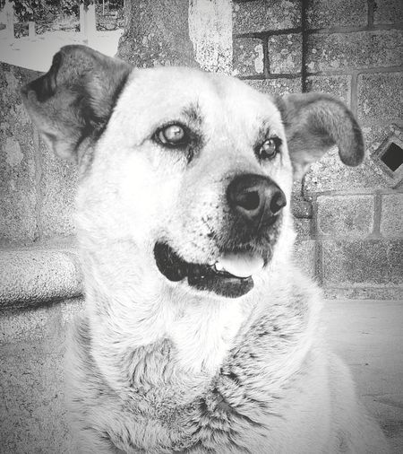 Dogslife Animal Photography Blackandwhite Photography Animallovers Black & White Eyeemblack&white