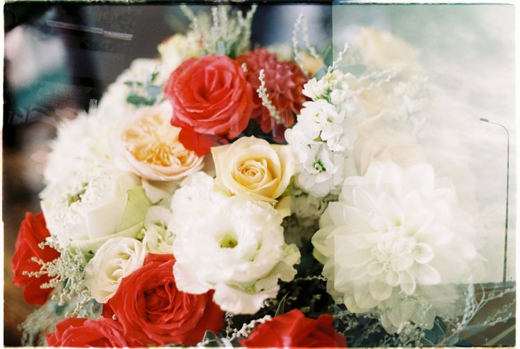 Filmcamera Film Photography Film Is Not Dead Film Flower Flower Head Rose - Flower Red Sashimi  Bouquet Multi Colored Variation Close-up Holi Peony  Powder Paint Egg Yolk Noodles Blooming Festival