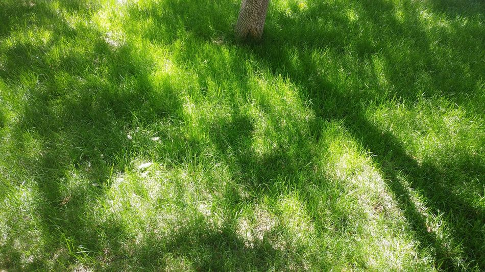High Angle View Green Color Grass Day Outdoors No People Full Frame Sunlight Nature Shadow Backgrounds Growth Soccer Field Close-up Yard Lawn Filtered Light Landscape