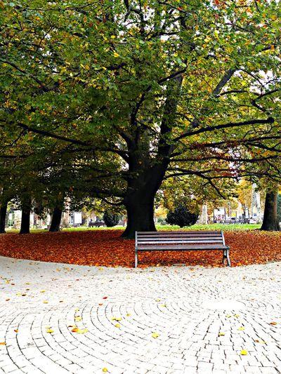 Autumn🍁🍁🍁 Autunno  Nature Beauty In Nature Tree