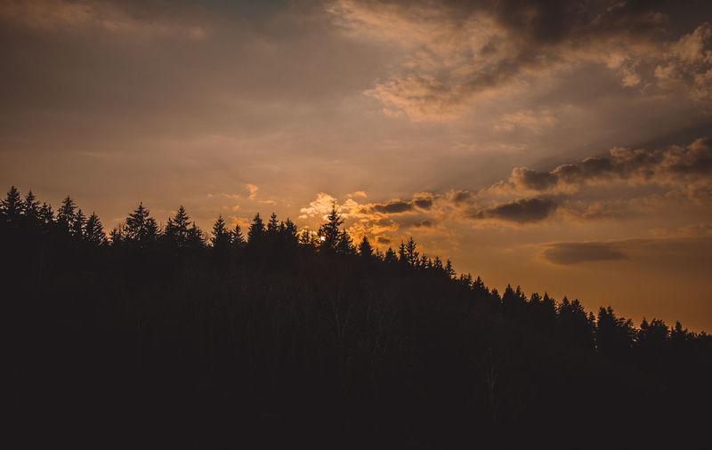 Tranquil Scene Tranquility Scenics - Nature Beauty In Nature Nature No People Sky Tree Cloud - Sky Plant Sunset Silhouette Non-urban Scene Forest Idyllic Environment Landscape Growth Land Outdoors