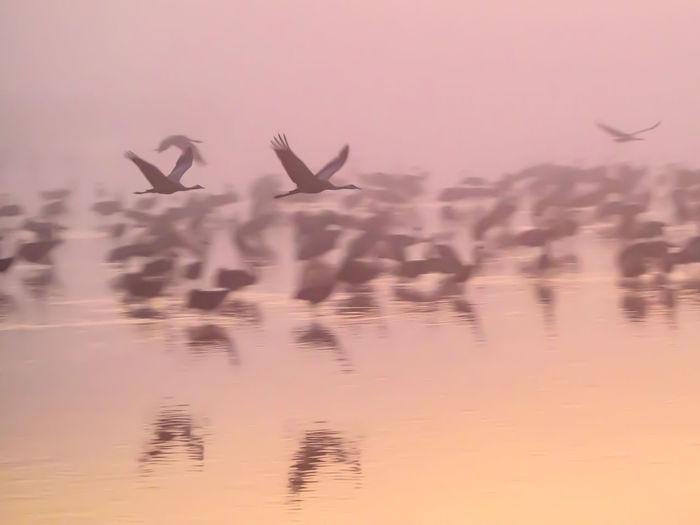 Cranes below