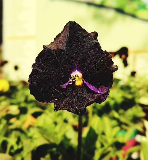 First Eyeem Photo Flowers Flower Pintu Patna Nature Black Color