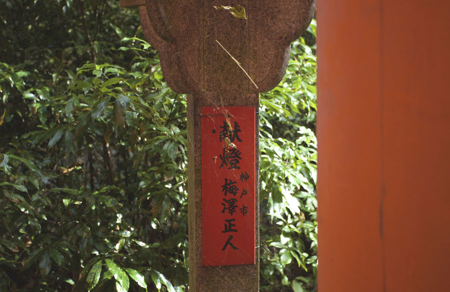 Japanese  Orange Shrine Belief Close-up Communication Day Focus On Foreground Hanging Mountain Nature No People Non-western Script Orange Color Outdoors Plant Red Religion Script Text Tree Western Japan Wood - Material