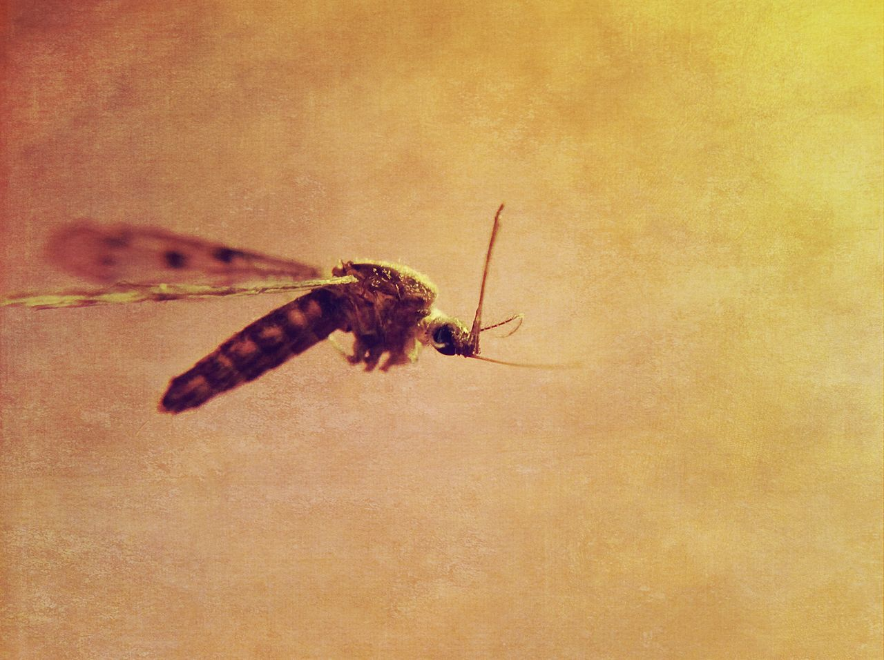 insect, one animal, animal themes, animals in the wild, no people, close-up, day, outdoors, nature