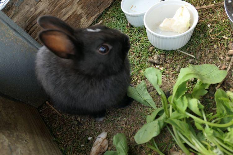 Pets Domestic Animals Animal Themes Black Color No People Indoors  Rabbit 🐇 Captivity