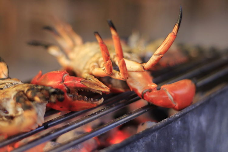 Barbecue Barbecue Grill Close-up Crustacean Food Food And Drink Freshness Grilled Healthy Eating Meat Nature No People Outdoors Prawn Seafood Selective Focus Shrimp - Seafood Skewer Snack Wellbeing