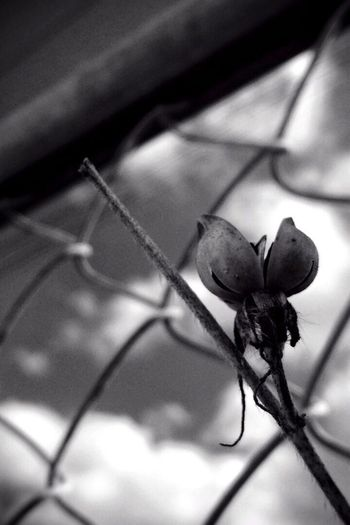 空を求める Plants Nature IPhoneography Bw_collection Black & White