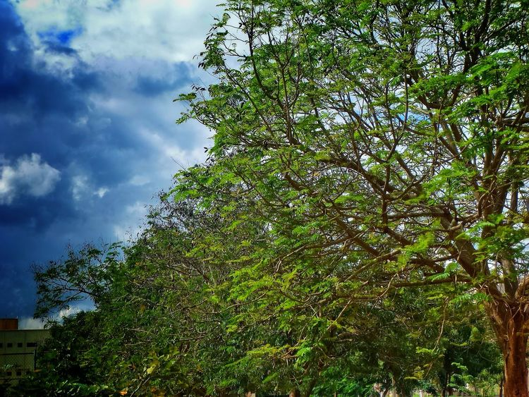 Tree Nature Sky Beauty In Nature Growth Ever Green