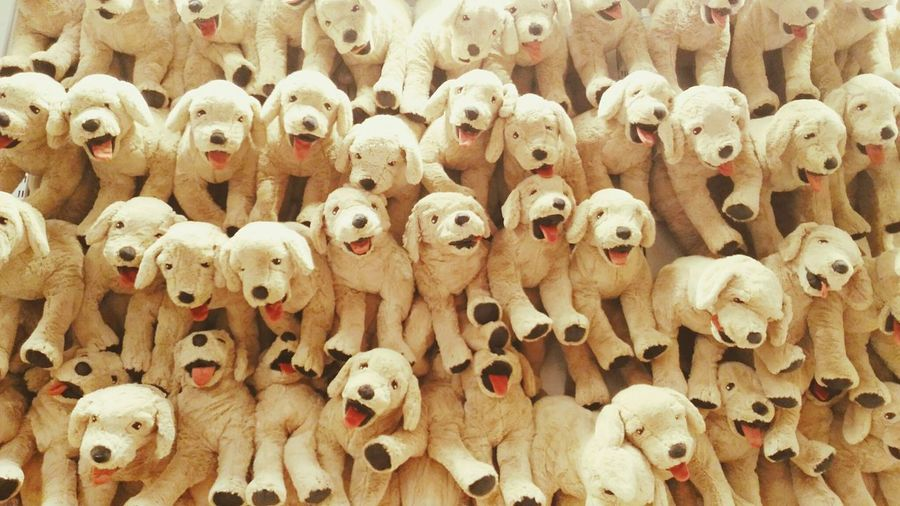 Doglover Dogs Dog Love Plush Doll Backgrounds Full Frame For Sale Close-up