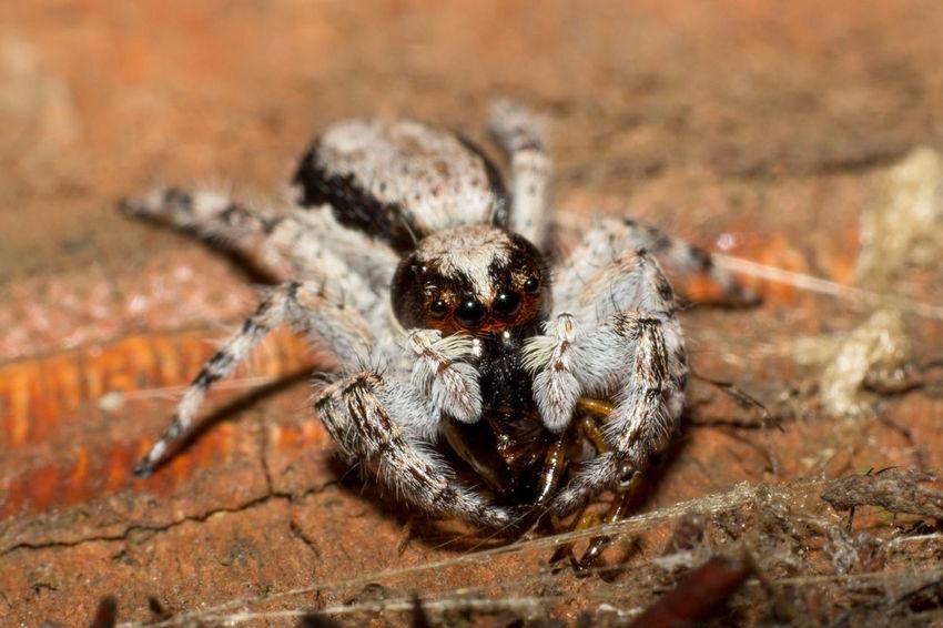 Cameron Highlands, Malaysia EyeEm Nature Lover EyeEmNewHere Animal Eye Animal Wildlife Close-up Macro Outdoors Spider