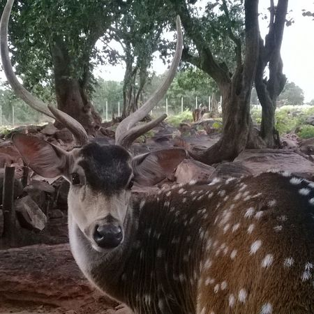 Taken by @natrajsubramanian at tirumala animal camp Tirumala Deer Animals camp Ps25under25