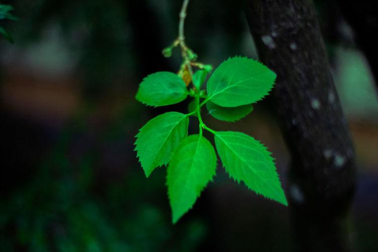 Nature Beauty