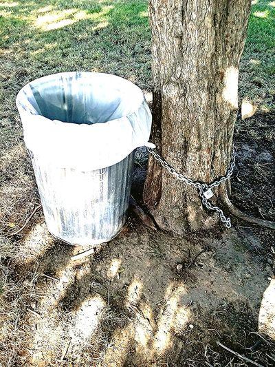 Hmmm.. Powellpark Trashcan Tree Marriedwithchildren