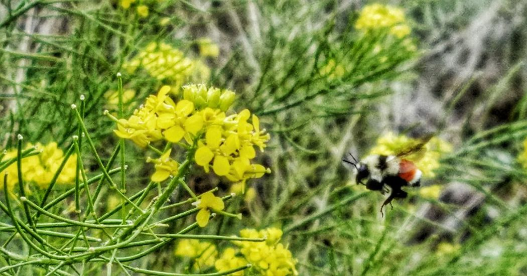 Bee Yellow Flowers Food Hunter Flying Nature Photography Showcase July