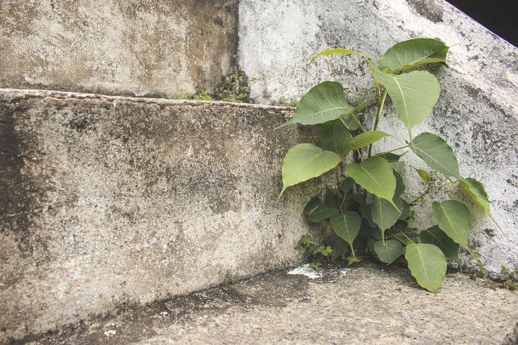 Close-up of plant growing on retaining wall
