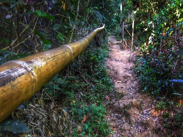 Bamboo Bamboo - Material Pipe - Tube Nature Kulotitayclicks Mobile Global Shooters Mobile Photography Into The Woods Forestwalk Mountain Hiking Mountain Trail Tranquil Scene Tranquility Mountains