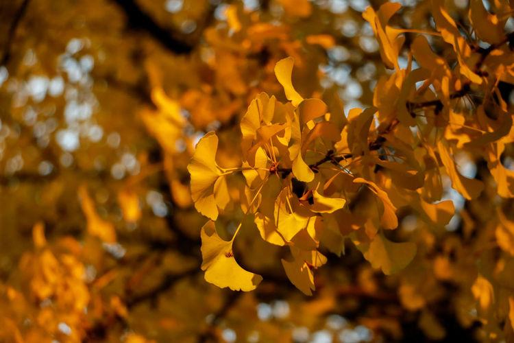 一叶知秋 Autumn