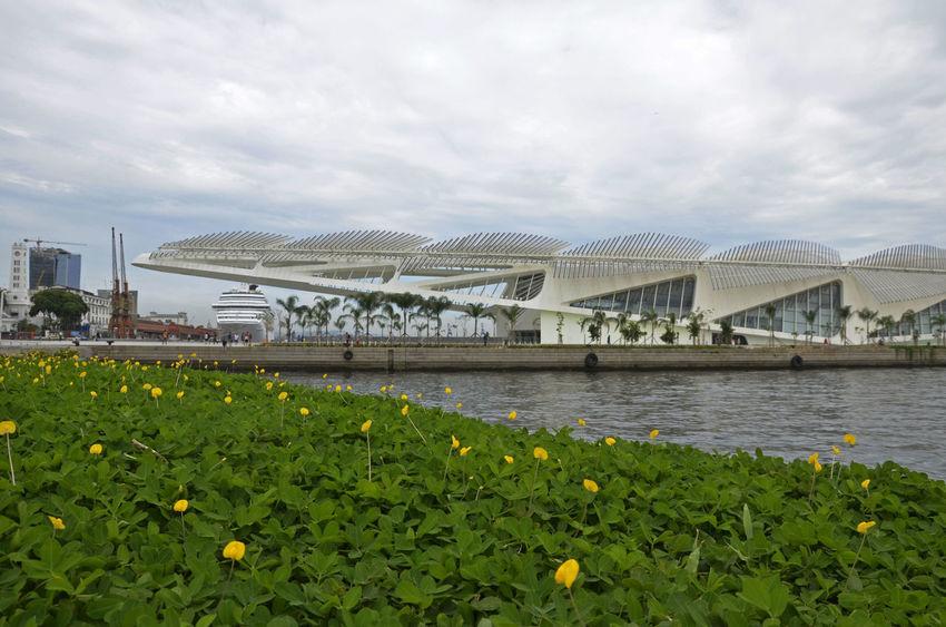 Alexandre Macieira Architecture Brasil Brazil Design Flowers Labdscape Modern Modern Architecture Museu Do Amanhã Museum Paisagem Porto Maravilha Praça Mauá Rio Rio De Janeiro Santiago Calatrava Tourism Turismo
