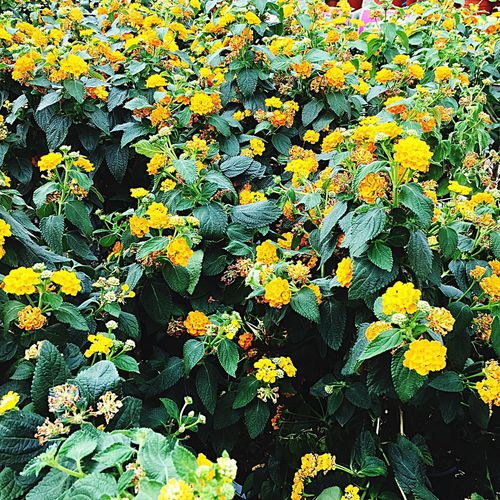 Flower Growth Flowering Plant Yellow Plant Beauty In Nature High Angle View Freshness Nature No People Flower Head