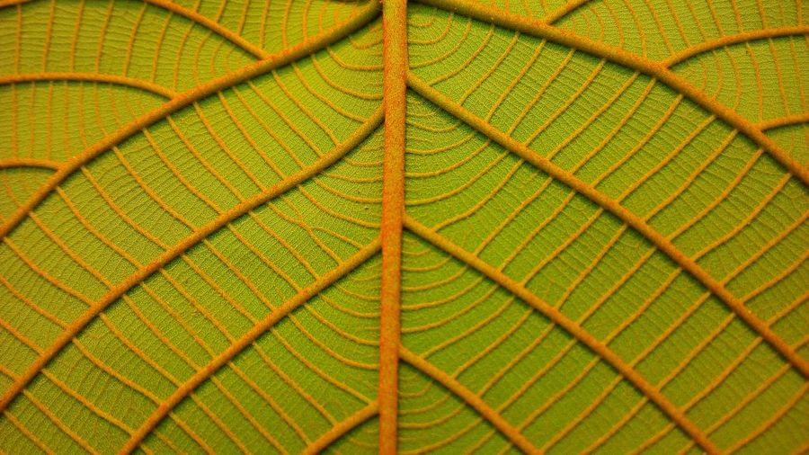 Plant Part Backgrounds Leaf No People Wall Art Wallpaper Abstract EyeEm Best Shots EyeEm Nature Lover Close-up Full Frame Green Color Pattern Texture Beauty In Nature Leaf Vein Natural Pattern Lines Nature Growth Tree Plant Textured  Abstract Backgrounds View Best EyeEm Shot Lined Pattern Fiber