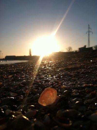 Nofilter Sun Beach Shells