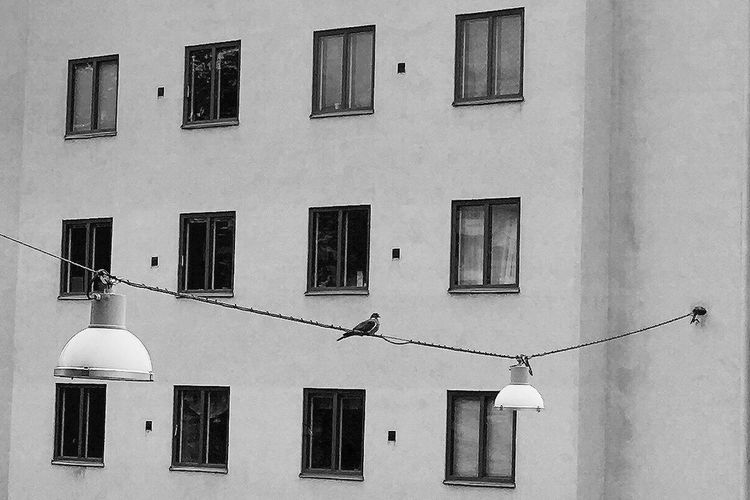 Hanging Out Building Exterior Architecture Window Built Structure Outdoors Day Residential Building No People Bird Sky Dove Streetlights Urban City Streetphotography Streetlife Blackandwhite Monochrome Bnw Stockholm Sweden Black And White EyeEm Selects