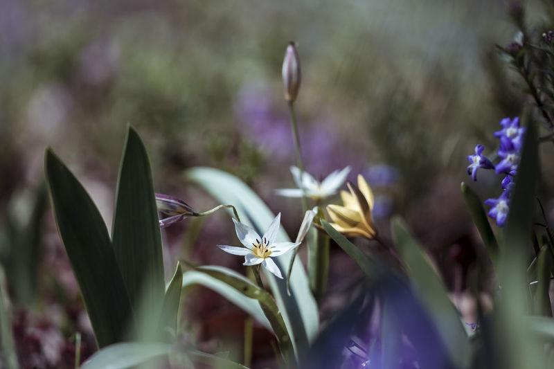 ©️892 spring.