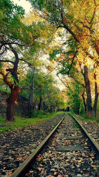 Railroad Track First Eyeem Photo Nature Photography Outdoors Model High Angle View Arid Climate Large Group Of Objects Rock - Object Stone - Object Geology Day The Way Forward Tree Green Color Nature Beauty In Nature Scenics Transportation Sky Rail Transportation No People Growth Physical Geography Phorographer