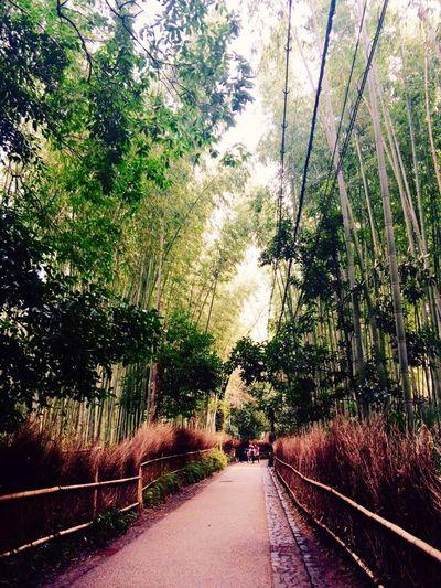 Arashiyama Japan Picture View Bambusoideae Travel