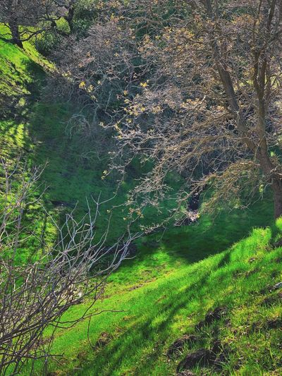 """Light The Ravine"" The afternoon sun filters through bare tree branches into a ravine, just touching the trickling creek below in a city open space area. Bare Branches Bare Tree Tree Limbs Tree Branches Green Color Creek Sunlight Ravine Green Color No People Water Full Frame Nature Beauty In Nature High Angle View Backgrounds Tranquility Sunlight Scenics - Nature Grass"