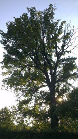 Be' un albero è sempre un albero... mica un tornio! On The Road Old Tree Great View Foto By Ulk